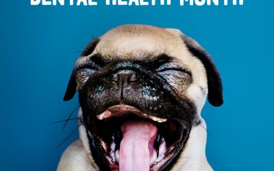 Five Reasons to Prioritize Your Pet's Dental Health