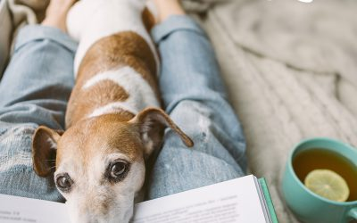 Six Ways to Lower Pets Stress Levels During Difficult Times