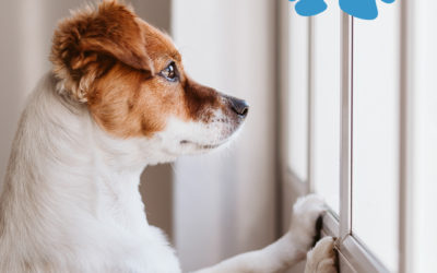 Six Tips for Treating Your Dogs Separation Anxiety