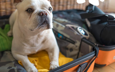 Seven Tips for Traveling with your Pet During the Summer